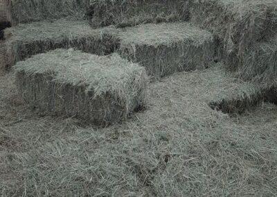 Keeping The Hay Dry   HandyCompactTractors.co.uk